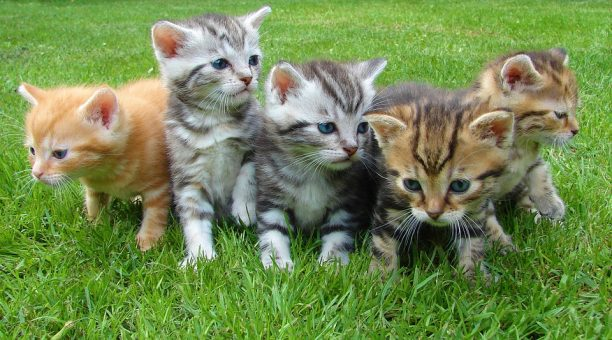 Should I take a kitten - 5 kittens