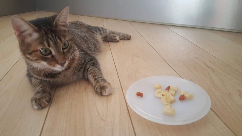 Safe and healthy fruit for cats