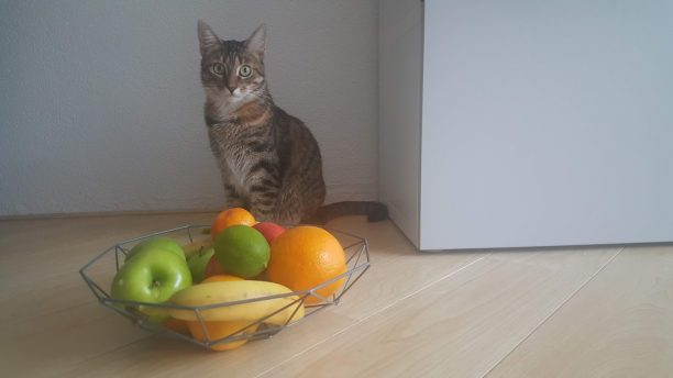 Fruit for cats
