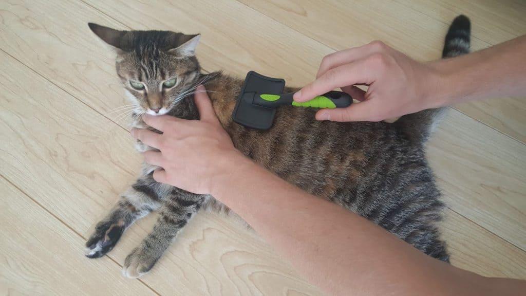 Combing kat