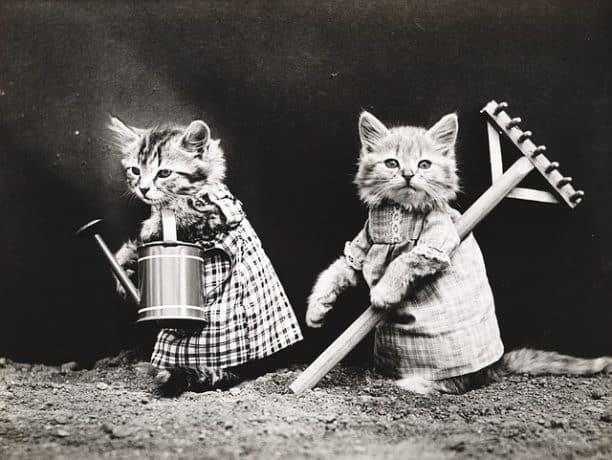 nice cat sweaters