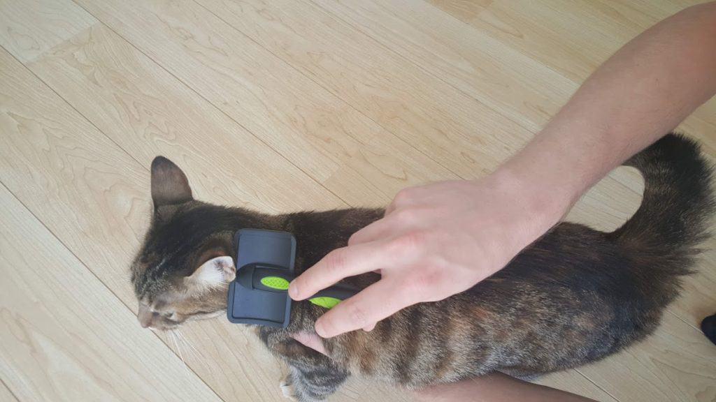 combing a cat