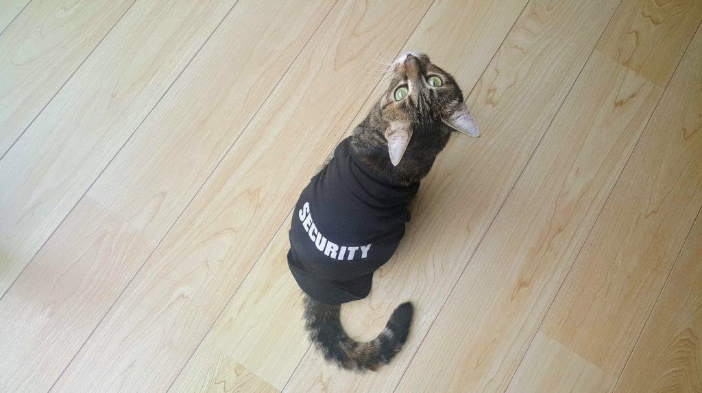 Cat with security sweater
