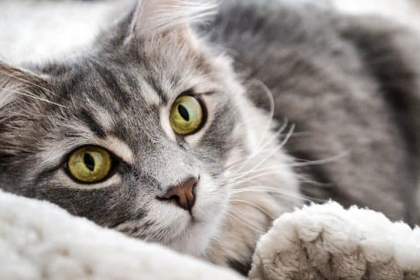 Can cats get a jet lag?