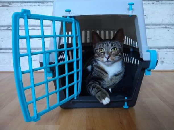 cat is laying in carrier