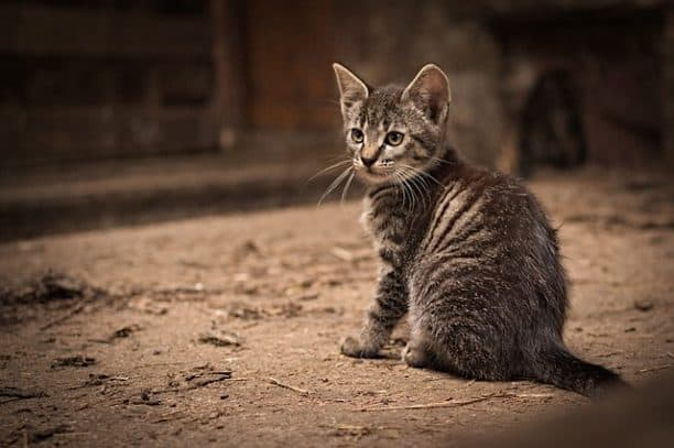 cute kitten is sitting on the street